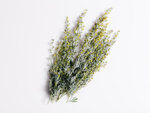 Medicinal Herbs, Sagebrush, Ar...