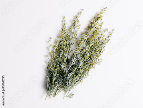 Medicinal herbs, Sagebrush, Artemisia, mugwort on a white background Canvas Print