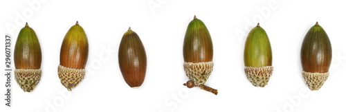 Photo Green and brown acorns set and collection isolated on white background, top view