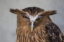 Portrait Of Angry Frightened B...