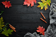 Autumn Banner. Autumn Colored Leaves. Top View. Free Copy Space.