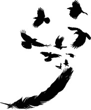 Crows Flying From Black Feather On White