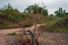 Drying Bush