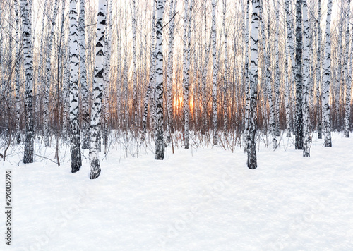 Obraz na plátně Winter landscape. Birch forest at sunset. Freshly clean snow