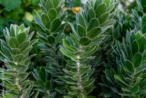 Plante grasse verte Canvas Print