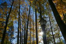 Lantern And Autumn Tree Crowns