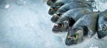 Fresh Dorado Fish On Ice At Seafood Market. Copy Space