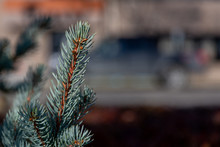 Evergreens In Downtown