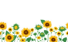 Seamless Border With Sunflower...