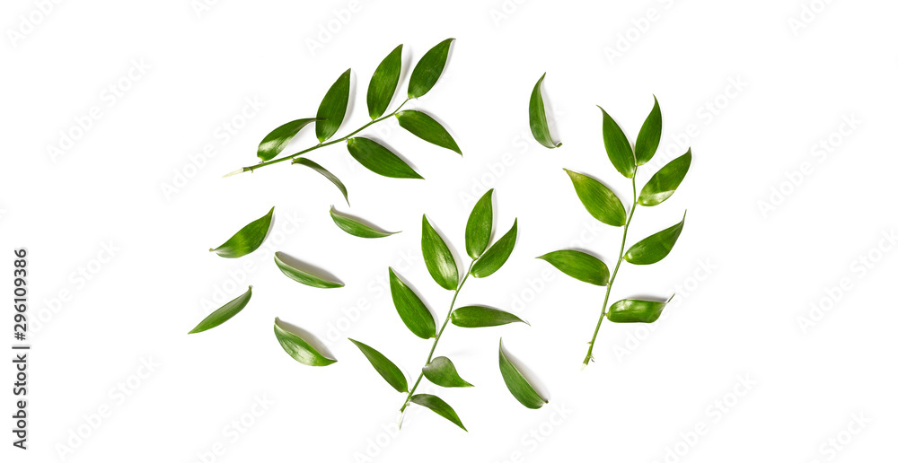 Fototapety, obrazy: Green leaves isolated on a white background