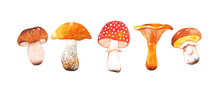 Watercolor Hand Drawn Set Of Autumn Mushrooms. Bright And Colorful Forest Elements. A Beautiful Collection For Thanksgiving Invitations, Posters And Banners. Autumn Time. Harvest Festival.