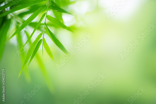 Poster Bamboe Bamboo leaves, Green leaf on blurred greenery background. Beautiful leaf texture in nature. Natural background. close-up of macro with free space for text.