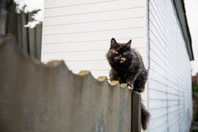 The Cat Sits On The Fence And Looks At The Prey: A Mouse, Bird Or Rat