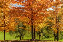 Bright Coloured Foliage Of A P...