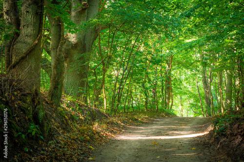 Photo Stands Green Licht auf dem Weg im Wald - Herbst auf Rügen