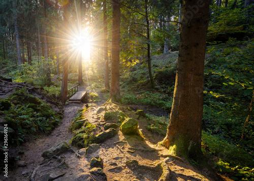 Photo Die letzten Sonnenstrahlen des Tages im Teutoburger Wald, Silberbachtal, Horn-Ba