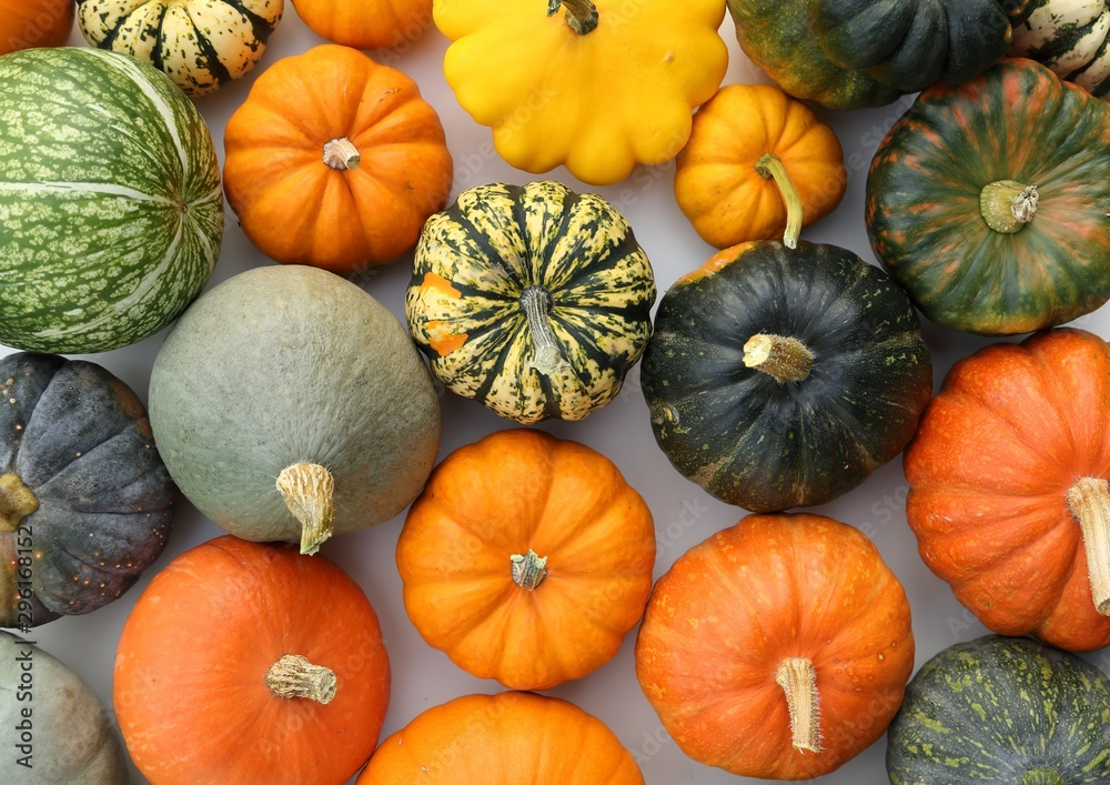 Fototapety, obrazy: Squash and pumpkins.