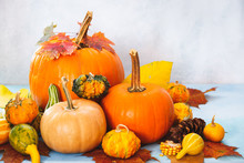 Assorted Pumpkins And Gourds For Fall Arrangement. Still Life Composition, Can Be Used For Thanksgiving Concepts Halloween, Autumn  Harvest ,  Selective Focus