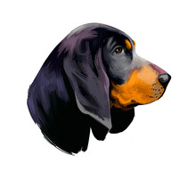 American Black And Tan Coonhound Dog Digital Art Illustration Isolated On White Background. American Origin Large Scenthound Dog. Cute Pet Hand Drawn Portrait. Graphic Clip Art Design For Web, Print