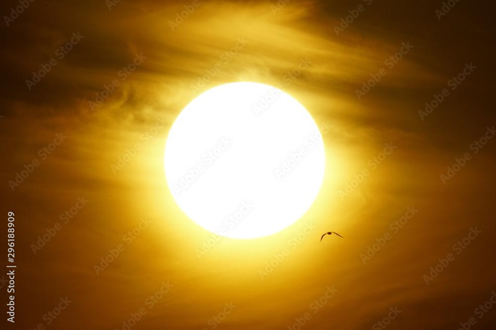 Fototapety, obrazy: solar disk malaga andalucia spain