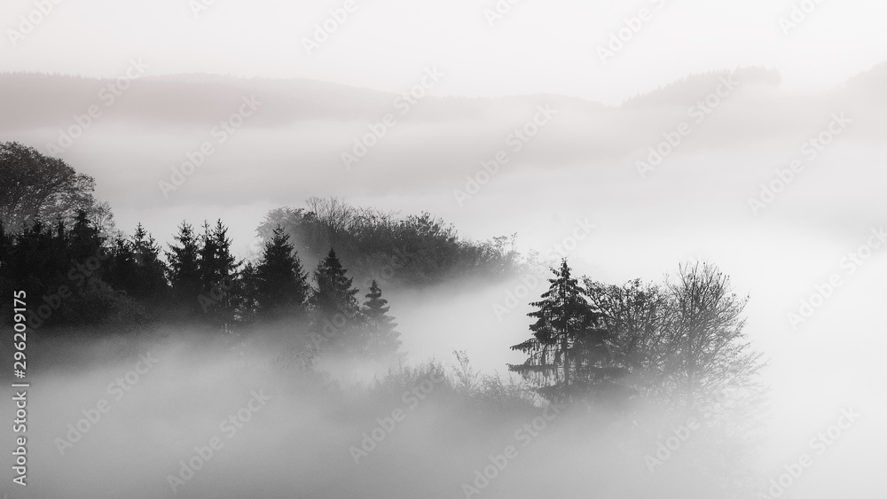 Fototapeta Beautiful shot of a forest in a fog with a cloudy background black and white, great for background