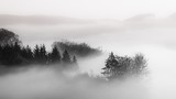 Beautiful shot of a forest in a fog with a cloudy background black and white, great for background - 296209175
