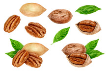 Pecan Nut Set Composition Wate...