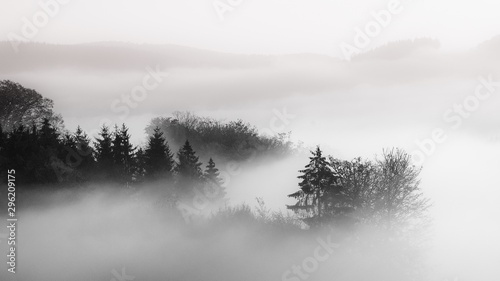 Foto auf Gartenposter Weiß Beautiful shot of a forest in a fog with a cloudy background black and white, great for background