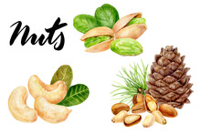 Pine Nut Pistachio Cashew Set ...