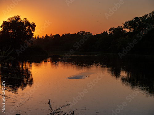 Canvas-taulu Duck landing at sunset gristmill access lower american river..