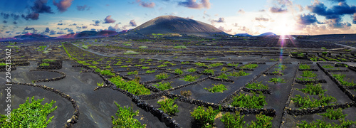 Vignoble La Geria vineyard on black volcanic soil.Scenic landscape with volcanic vineyards. Lanzarote. Canary Islands. Spain