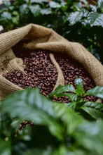 Open Bag With Coffee Beans Sli...