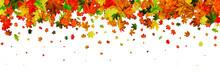 Autumn Leaves Isolated. Novemb...
