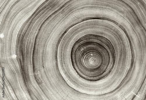 Old wooden oak tree cut surface Fototapet
