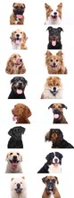 Group Beautiful House Pets In ...