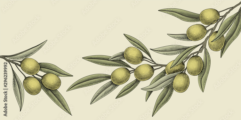 Fototapety, obrazy: Woodcut style olive illustration