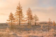 Golden Mist On Jack London Lake, Kolyma, Magadan Region