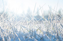 Winter Landscape, Frost-covered Grass Blades Of Snow