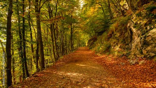 Autocollant pour porte Route dans la forêt road in the forest