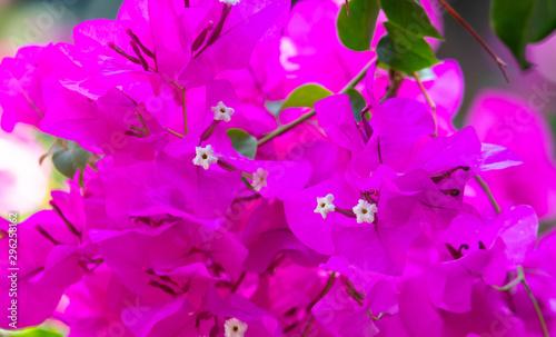 canvas print motiv - schankz : Beautiful pink flowers in nature