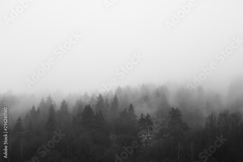 Photo fog in the forest
