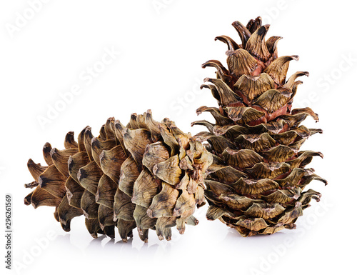 Cones of cedar pine isolated on white background.