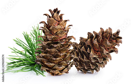 Cedar cones with branch on a white background.