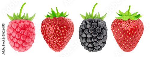 Obraz Multicolored collection of assortment of berries: strawberry, raspberry and blackberry isolated on a white background with clipping path. - fototapety do salonu