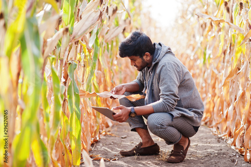 South asian agronomist farmer inspecting corn field farm Canvas Print