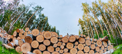 Fotobehang Brandhout textuur A large pile of felled trees on the edge of the forest. The sawn pine is piled up. Cut down the forest for fuel