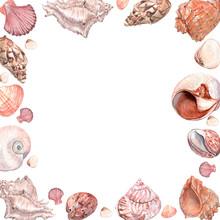 Watercolor Illustration Of Seashells Frame