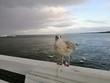 Seagull ptak na molu blisko morza