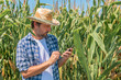 Leinwandbild Motiv Farmer text messaging on mobile phone in corn maize field