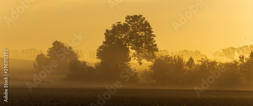 Keuken foto achterwand Honing Autumn rural landscape with morning mist ,trees and beautiful wavy fields